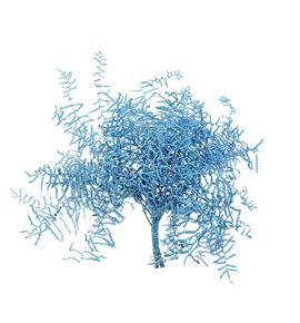 Helecho coral azul claro - HELCORAZUCLA