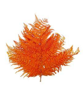 Helecho preservado naranja - HELPRENAR