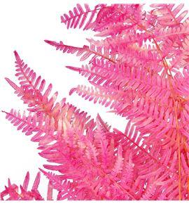 Helecho preservado rosa - HELPREROS