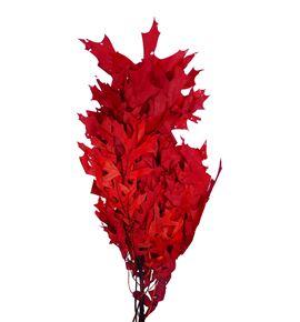 Querqus preservado rojo - QUEPREROJ