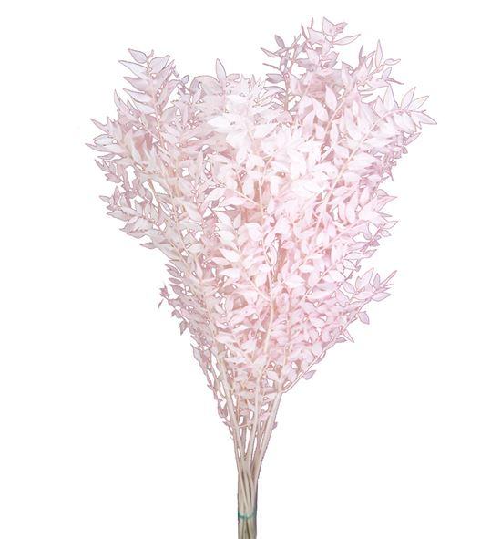 Ruscus fino preservado rosa claro - RUSFINPRECLA