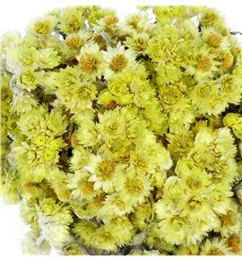 Anaphalis seca amarilla - ANASECAMA