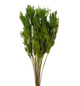 Esparraguera seca verde - ESPSECVER