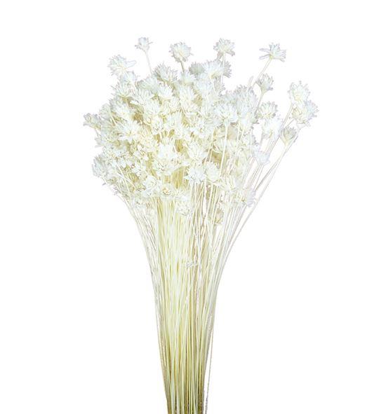 Hill flower seco blanco - HILFLOSECBLA