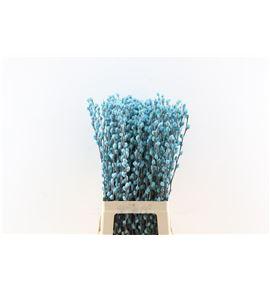 Salix wilgenkatjes azul claro 70 - SALWILAZUCLA