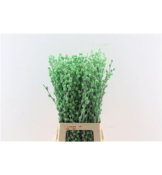 Salix wilgenkatjes verde claro 70 - SALWILVERCLA