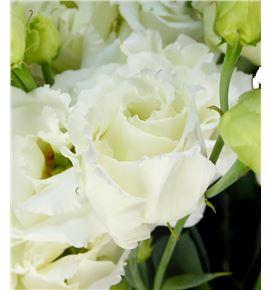 Lisianthus alissa white 75 - LISALIWHI