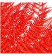 Helecho preservado rojo - HELPREROJ1