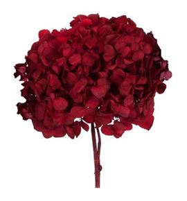Hydrangea preservada red - HYDPRERED