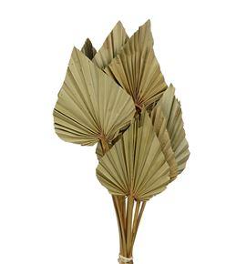 Palmito seco small natural 40cm - PALSEC
