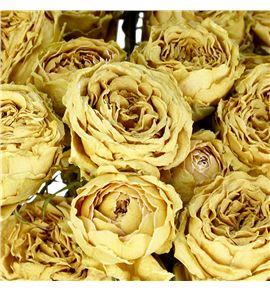 Rosa ramificada seca galina 60 - RTRSECGAL