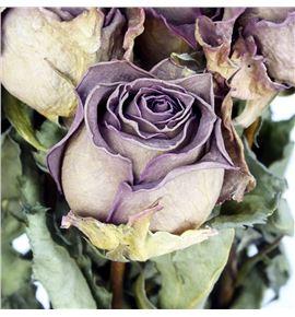 Rosa seca lila 50 - ROSSECLIL