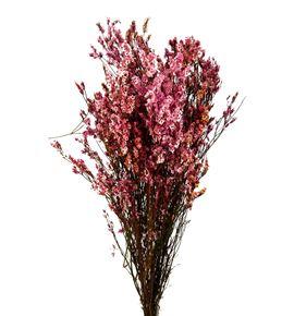 Limonium chino preservado pink - LIMCHIPREROS