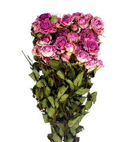 Rosa ramificada seca rosa - ROSRAMSECROS