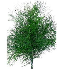 Treefer tintado - TRETIN