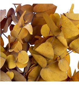 Eucaliptus preservado cinerea amarillo - EUCPRECINAMA