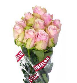 Rosa hol pink athena 40 - RGRPINATH