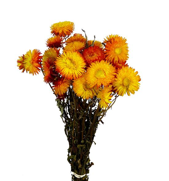 Helichrysum seco naranja - HELSECNAR