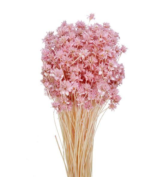 Hill flower seco rosa - HILFLOSECROS