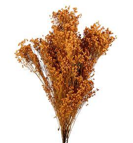 Broom bloom seco coral claro - BROSECCORCLA