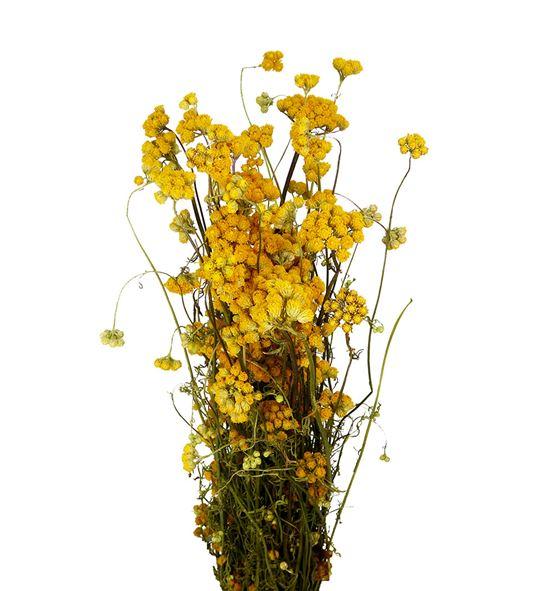 Lona seco yellow - LONSECYEL