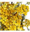 Lona seco yellow - LONSECYEL1