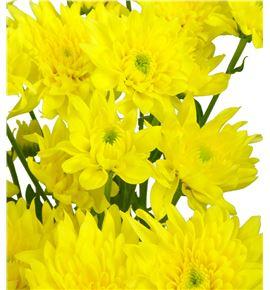 Marg hol baltica yellow - MHBALYEL