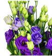 Lisianthus rosita blue 75 - LISROSBLU1