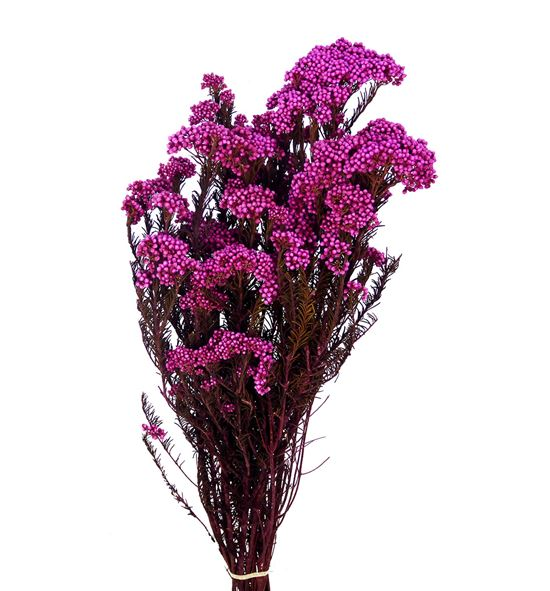 Flor de arroz preservada fucsia - FLOARRPREFUC