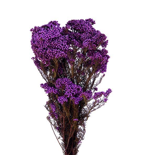 Flor de arroz preservada morada - FLOARRPREMOR