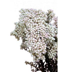 Flor arroz preservado blanco - FLOARRPREBLA