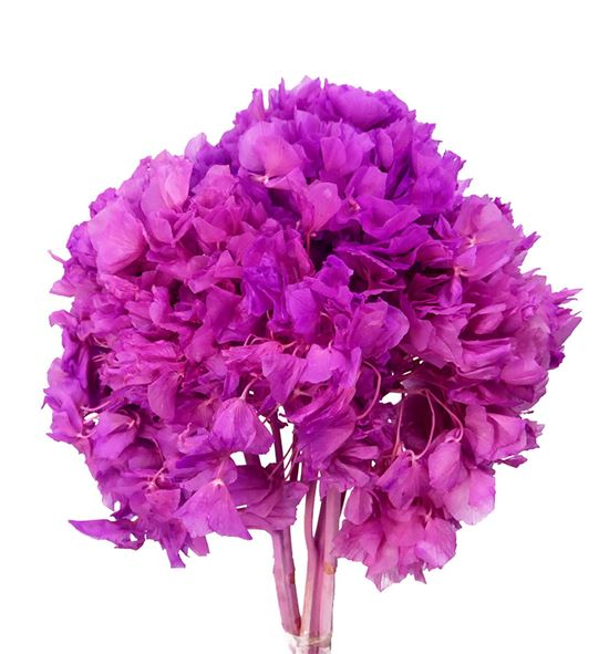 Hortensia preservada fucsia - HORPREFUC