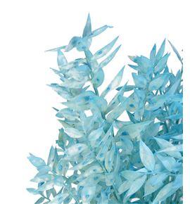 Ruscus fino preservado azul claro - RUSPREAZUCLA