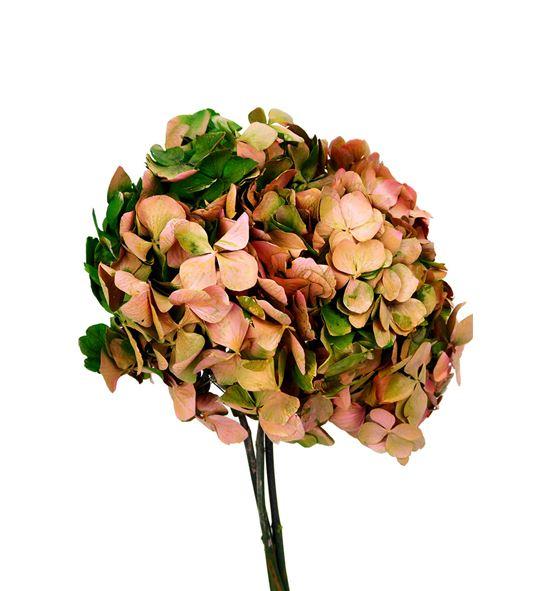Hortensia preservada bicolor hrt/2140 - HRT2140