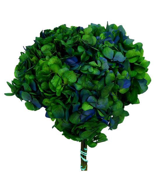 Hortensia preservada bicolor hrt/2160 - HRT2160