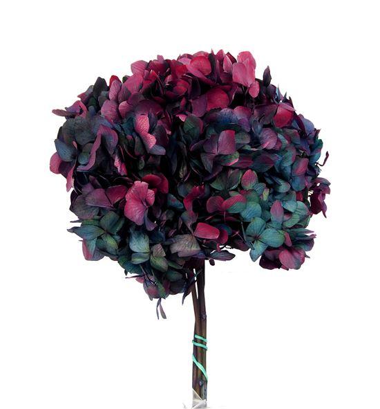 Hortensia preservada bicolor hrt/2680 - HRT2680