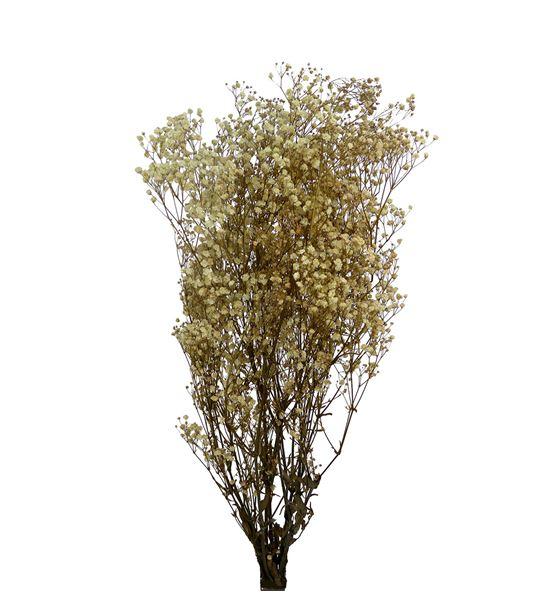 Gypsophila seca natural - GYPPRENAT