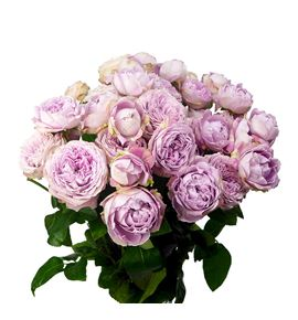 Rs ramificada blossom bubbles 60 - RTRBLOBUB