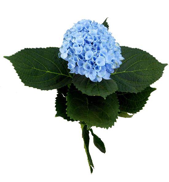 Hydr mag rev azul 50 - HYDMAGREVAZU