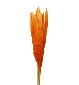 Cortaderia naranja 65 - CORNAR65