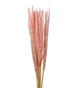 Cortaderia rosa claro 65 - CORROSCLA65