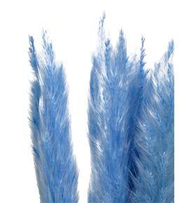 Cortaderia azul 65 - CORAZU65