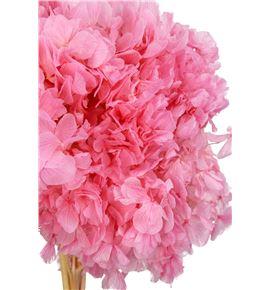 Hortensia preservada rosa - HORPREROS