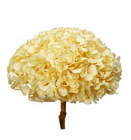Hortensia preservada champagne - HORPRECHA