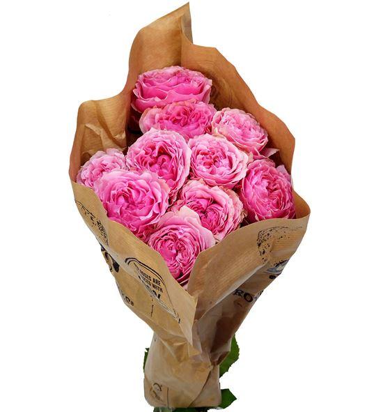 Rosa hol victorian kiss 50 - RGRVICKIS
