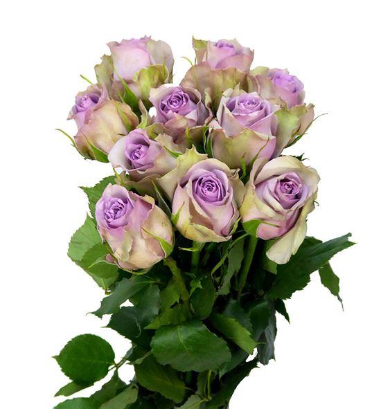 Rosa hol. samantha bridal 50 - RGRSAMBRI