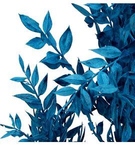 Ruscus fino preservado azul - RUSPREAZU