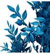 Ruscus fino preservado azul - RUSPREAZU1
