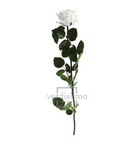 Rosa amorosa preservada estandar prz/1000 - PRZ1000-05-ROSA-TALLO-STANDARD