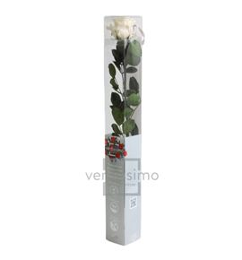 Rosa amorosa preservada estandar prz/1020 - PRZ1020-05-ROSA-TALLO-STANDARD